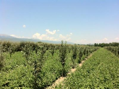 AG BIZ Macedonia – Prespa agriculture support