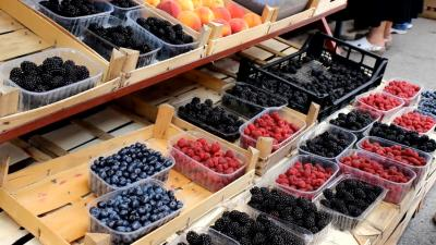 Value chain analysis of Fruits & Berries in South Serbia