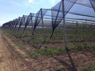 Техничка Помош во Воведувањето на Одржливи Земјоделски Практики во Струмичкиот Речен Базен